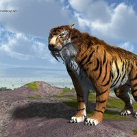 Sabertooth Tiger (Smilodon Fatalis)